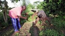 Mali: la ferme agro-écologique d'Oumar Diabaté