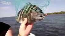 poisson avec dents humaine