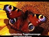 Schmetterling Tagpfauenauge Tiere SelMcKenzie Selzer-McKenzi