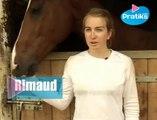 Equitation - Comment curer les pieds d'un cheval ?