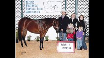 2003 AQHA Bay Western Pleaure Show Mare- Multiple Winner ready for Youth or Amateur