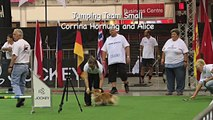 Winning team small dogs, FCI Dog Agility World Championship 2013, South Africa: Germany