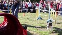 Lietuvos mokyklose - pamokos apie šunis ir jų priežiūrą