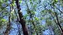 Ballade Nature Chants d'oiseaux