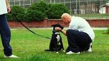 En prison, des incarcérés s'occupent des chiens abandonnés