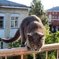#cat #cats #coolcat #catsagram #catstagram #instagood #kitten #kitty #kittens #pet #pets #animal #