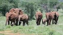 KENYA NOVEMBER 2012 PHOTO SAFARI led by Stu Porter WILD4 Photo Safaris