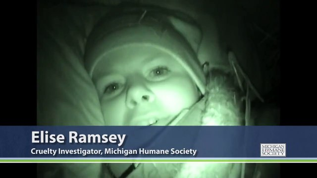 Investigator Ramsey Shares Her Thoughts from Inside the Doghouse