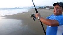 Pesca de Pez Gallo Roosterfish - Pesca de Playa