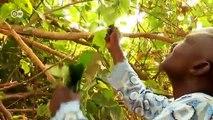 África hacia el futuro: curanderos modernos en Nigeria | Global 3000