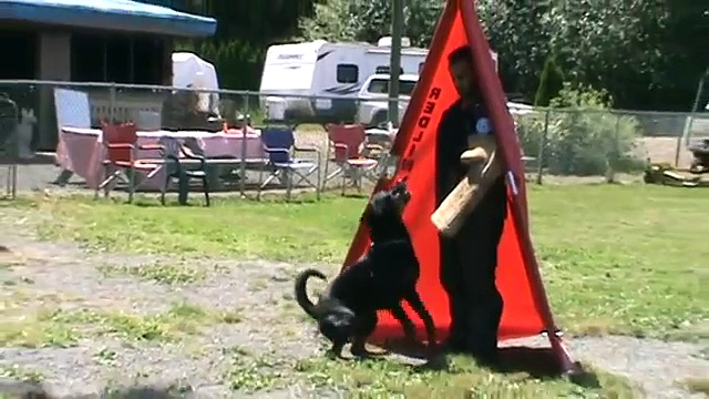 Rottweiler Schutzhund 3 – Protection