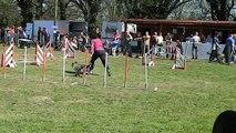 Concours Agility Club du chien de Bourg en Bresse avril 2013.