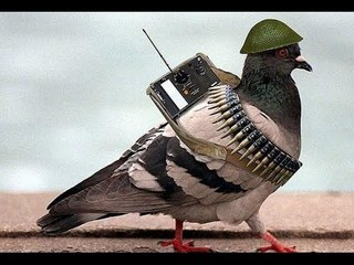 Spy Pigeon from Pakistan : Hilarious But True
