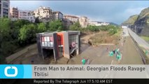 From Man to Animal: Georgian Floods Ravage Tbilisi