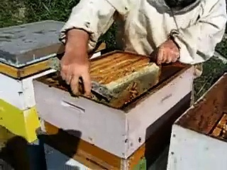 Removing honey from bee hive in Prespa