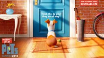 The Secret Life of Pets - Teaser Trailer #1 [VO|HD]