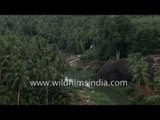 Palm and banana cultivation in Shola forests of Western Ghats