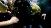 Cage aux requins Marineland Antibes