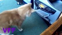 LOL Cat Fail Compilation Videos   Epic Funny Cats Jump Fail 2015   Funny Cat Fails No 145