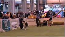 YKC Elementary Obedience Finals Crufts 2007