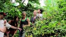 Intro: El Tigre Costa Rica South-South Project