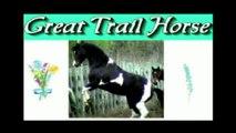 Foxtrotters can jump! Leo and JAKS, MFTHBA horses jumping 4 feet.