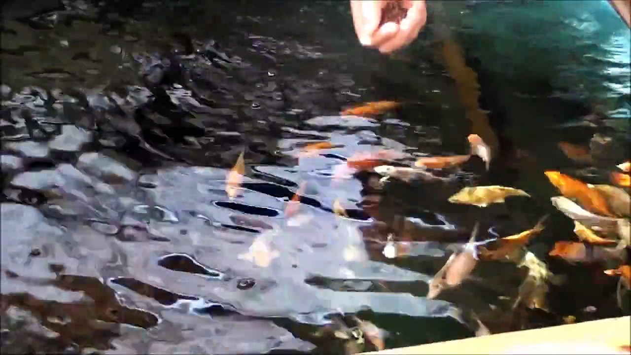Aquaponics Tour 2011 – Sahib Punjabi Aquaponics Farm