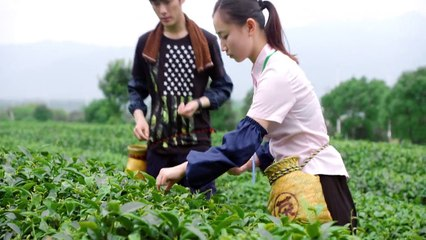 閃亮茗天 第55集 Tea Love Ep55