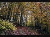 Un Bosc de llegenda: Les roques encantades o encadenades