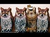 LOLCats in Rockin Robin Birds Wild Chicks Cats Fun Funny Cats