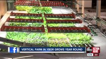 Verticle, indoor urban farming is turning out primo produce for local chefs