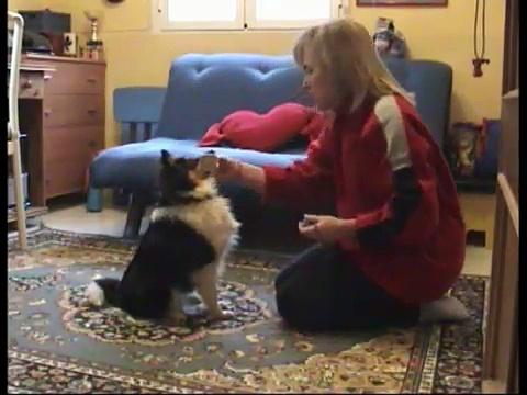Puppy Training 7 months – Apport – Control de estímulos