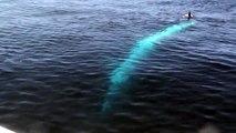 Blue Whale thinks he is in JAWS! Dana Point Whale Watching - Dana Wharf