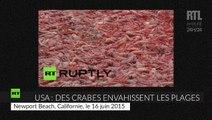 États-Unis : des millions de petits crabes échouent sur les plages californiennes