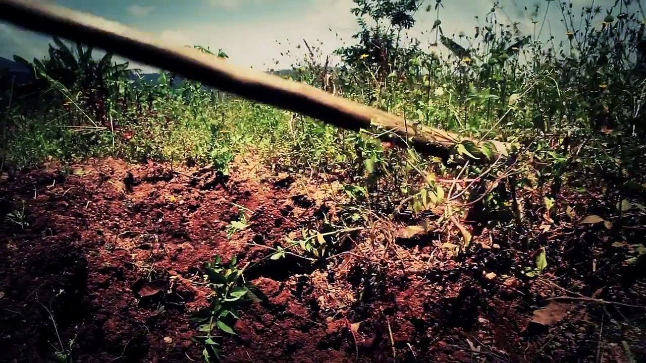 Beekeeping Strengthens a Community in Rwanda | World Vision