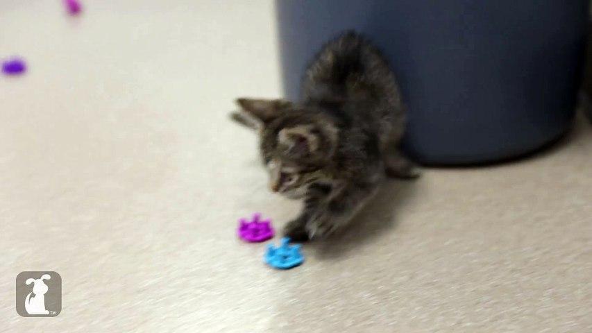 Scaredy Cat Kitten