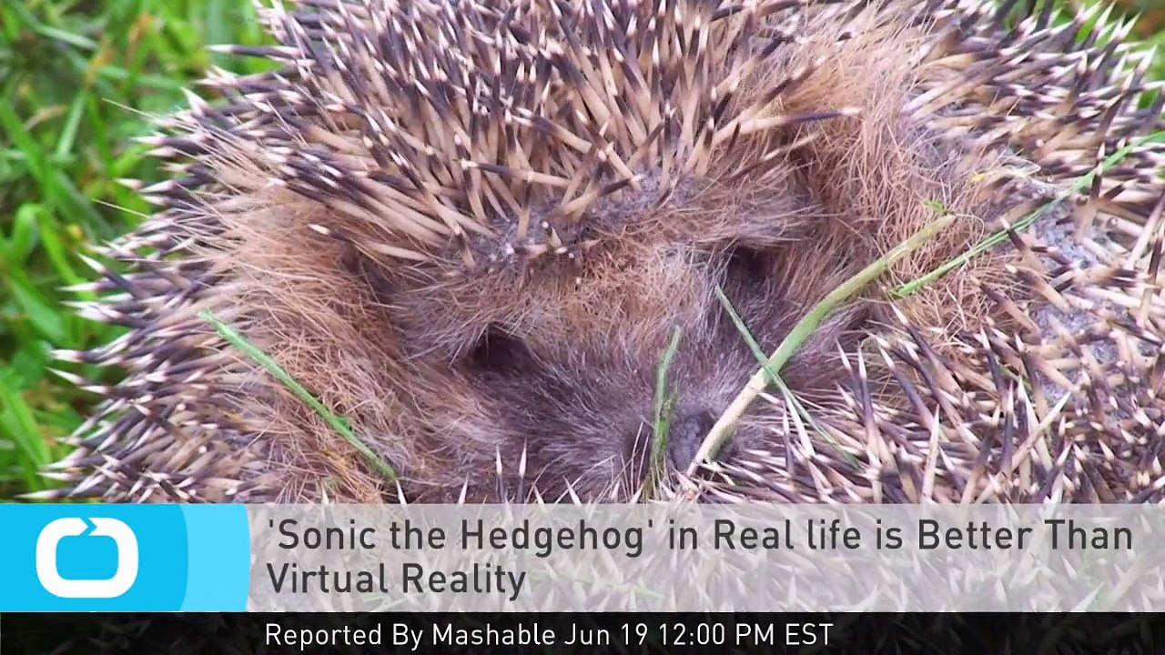 Sonic The Hedgehog In Real Life Is Better Than Virtual Reality Video Dailymotion