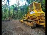 Rainforest Rescue Daintree Rainforest