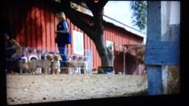 Best Super Bowl commercial 2014   Best buds!! Dog and horse  Budweiser