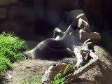 anteaters wrestling