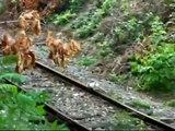 """29.7.10 - Vlaky kolem zastávky """"Chrudim zastávka"""""""