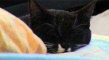 cat in bed - cute sleeping kitten / Katze im Bett - süßes Kätzchen schläft
