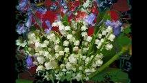 Les belles fleurs de Printemps