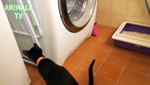 Funny Cats- Crazy Funny Catsvs Washing Machines Imaginary Enemy of Cats Compilation