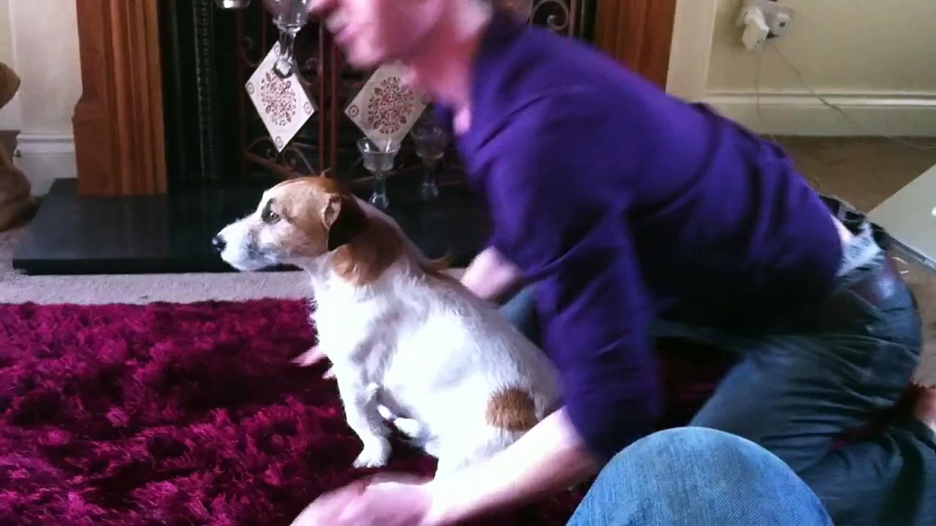 How to train a Jack Russel