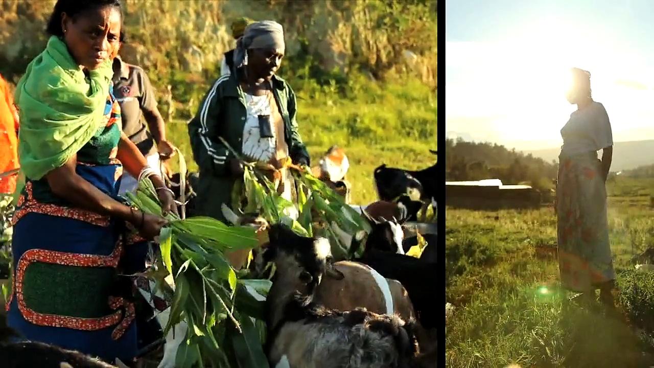 The Transformative Power of Livestock