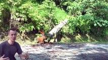 Jungle camp: dangers and precautions