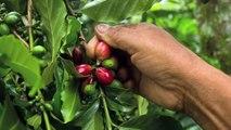 Entrevista a Héctor Robles sobre los subsidios al campo en México