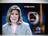 Pit bull brutally attacks helpful elderly woman