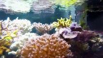 Aquarium récifal eau de mer  Reef tank 280 L 75 G  (1 an)